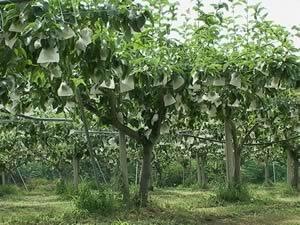 2004年7月22日の中谷農園の様子です。