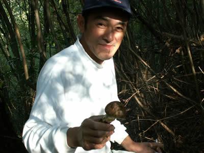 丹波松茸収穫