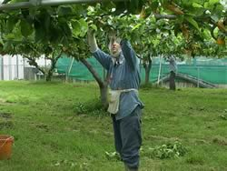梨の小袋掛け