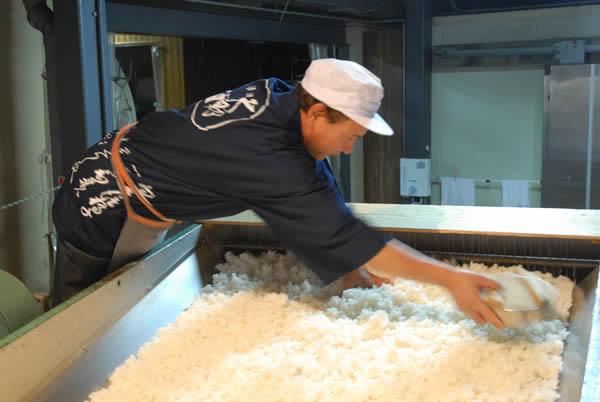 蒸し上がった酒米に麹菌を振りかける工程