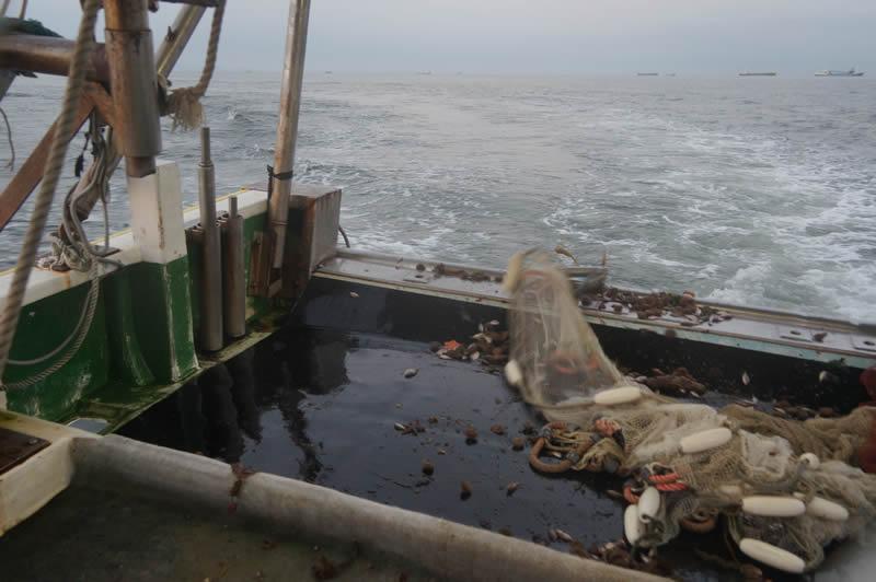 明石のたこ漁